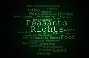 Support of the draft UN Declaration on the peasants rights