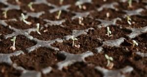 Програма підтримки інноваційного підприємництва в агропродовольчій галузі EIT Food Seedbed 2021
