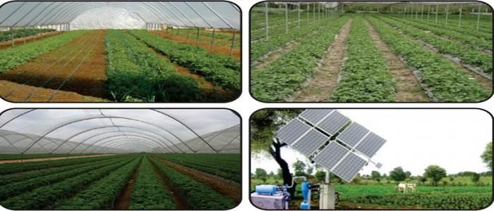منافع بخش زراعت کیلئے کسانوں کو سولر سسٹم اور ٹنل ٹیکنالوجی کی فراہمی کا منصوبہ