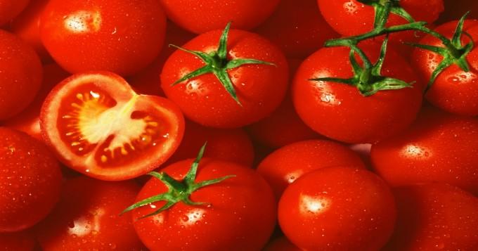 ٹماٹرکی اچھی فصل کے لئے ہائبرڈ اقسام کاشت کی جائیں، محکمہ زراعت