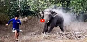 وائلڈ لائف افسر پر ہاتھی کا حملہ، ویڈیو وائرل