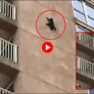 سیدھی دیوار پر چڑھنے والی بلی نویں منزل سے نیچے کر گئی