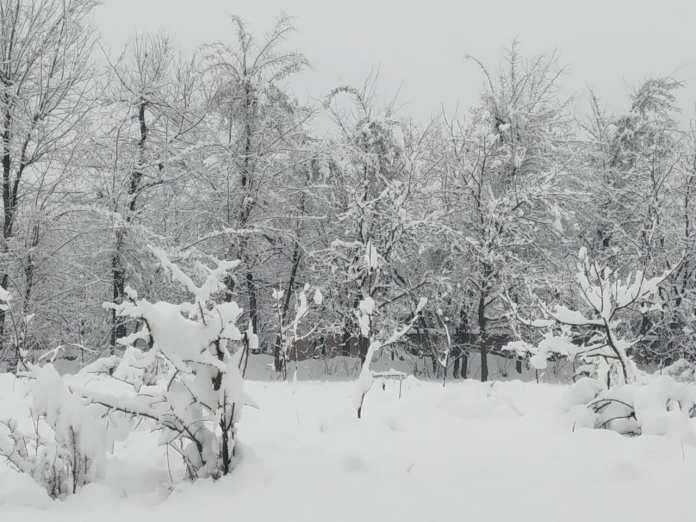 کشمیر میں برف باری کا سلسلہ جاری، معمولات در برہم