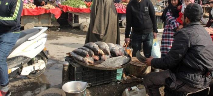 برڈ فلو کا خوف ،گوشت کی قلت:گزشتہ دو ماہ کے دوران مچھلیوں کی مانگ میں 20فیصد اضافہ