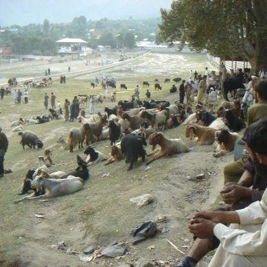 عید الاضحی قریب آگئی ،جانوروں کی قیمتیں بھی بڑھ گئیں