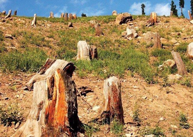 دیامر: نیاٹ میں جنگلات کے تحفظ کیلئے مقامی کمیٹیاں تشکیل دے دیا۔