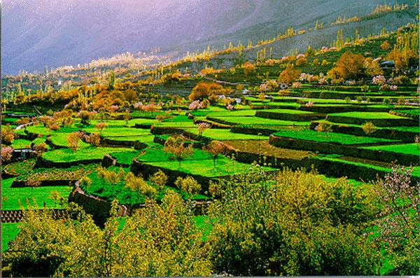 ہنزہ میں زمین کا سرکاری نرخ نامہ زمینی حقائق کے برخلاف ہے، فی کنال سرکاری قیمت بڑھائی جائے، نمبردار اسلم اور فدا کریم کا مشترکہ بیان