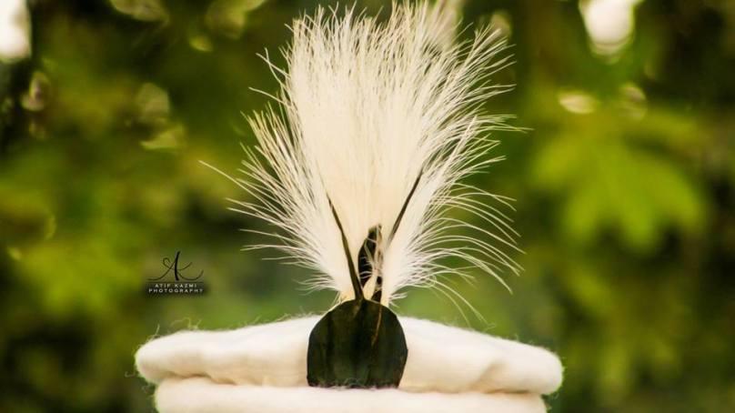 شانٹی ڈے منانے کے لئے نایاب پرندے کا شکار کیا گیا، محکمہ جنگلی حیات کیوں خاموش ہے؟، شہزاد الہامی