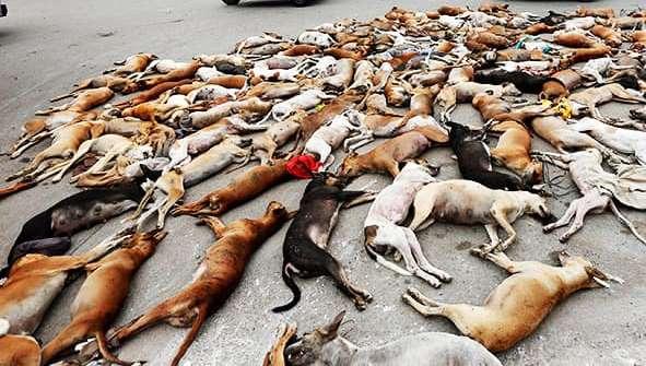دنیور، جگلوٹ سمیت ضلع گلگت کے دیگر مقامات پر جلد کتا مار مہم شروع کیا جائے، حمزہ سالک ڈپٹی کمشنرکی ہدایت
