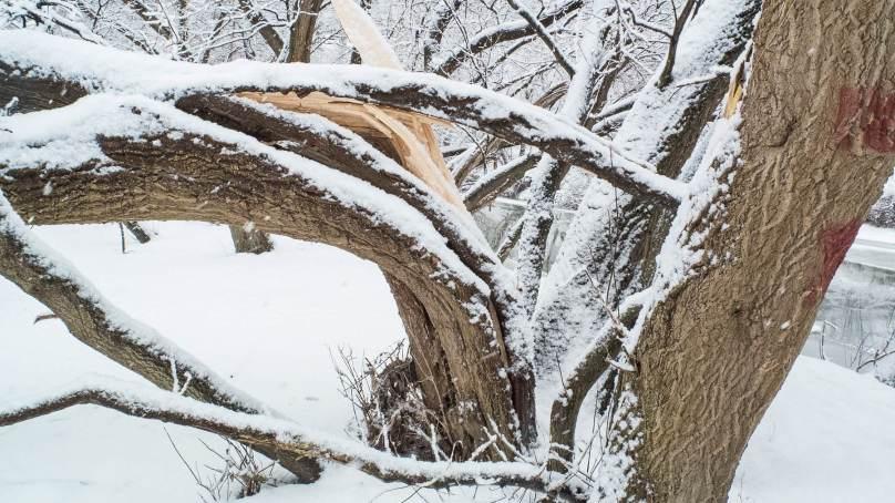 گانچھے : برف باری سےدو ہزار سے زائد درختوں کو نقصان پہنچا
