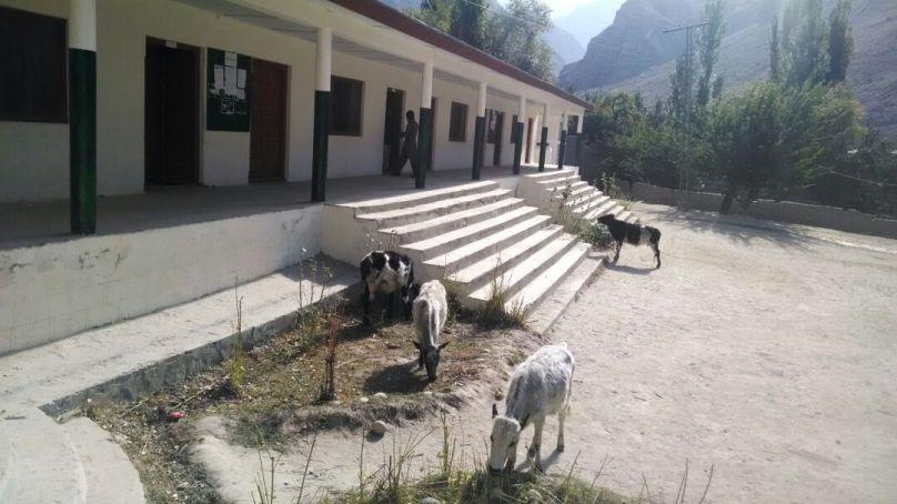 """شگر کے علاقے داسو میں سکول کی چاردیواری غائب، مویشی بھی """"داخل"""" ہو گئے"""