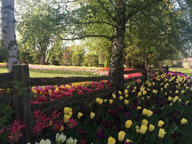 Beautiful Display Garden at Roozengaarde
