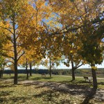 Parks for best fall colours in Calgary
