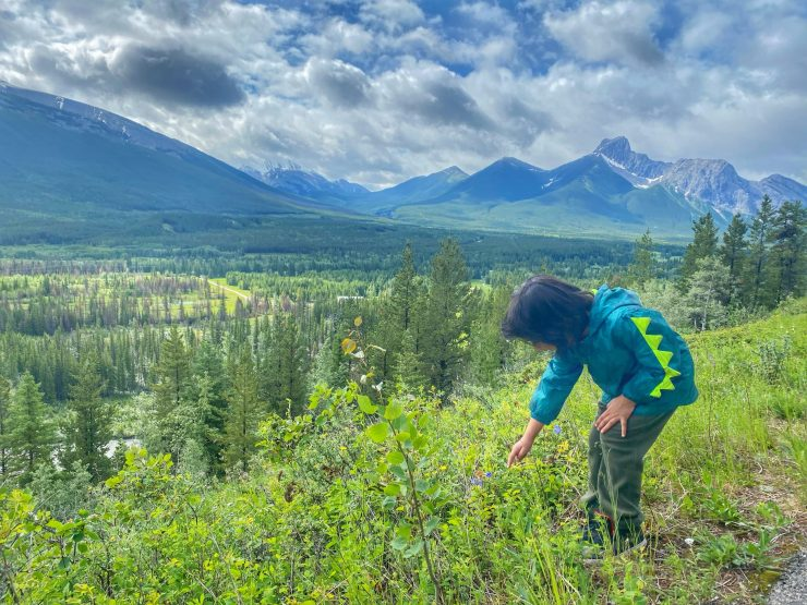 Kananaskis Mountain Lodge walking trail