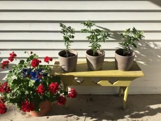 Porch to garden 001