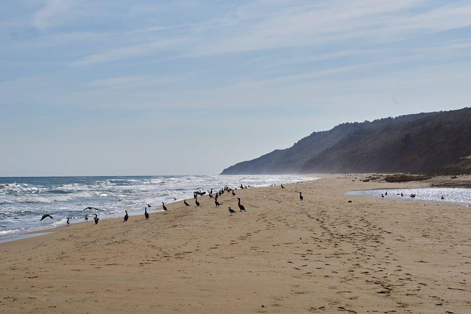 Плажът Карадере. Снимка: БФБ