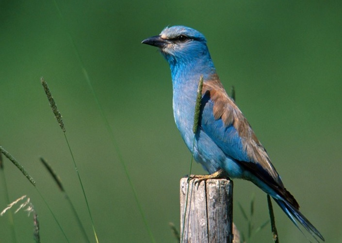 Тази красота например се нарича синявица. Снимка: БДЗП
