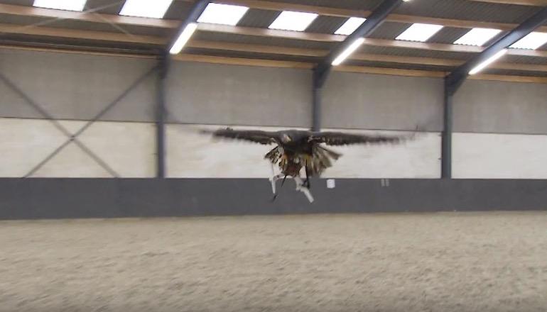орел дрон лов