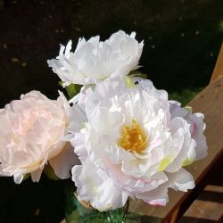 Artificial Peony, White with pink edges.