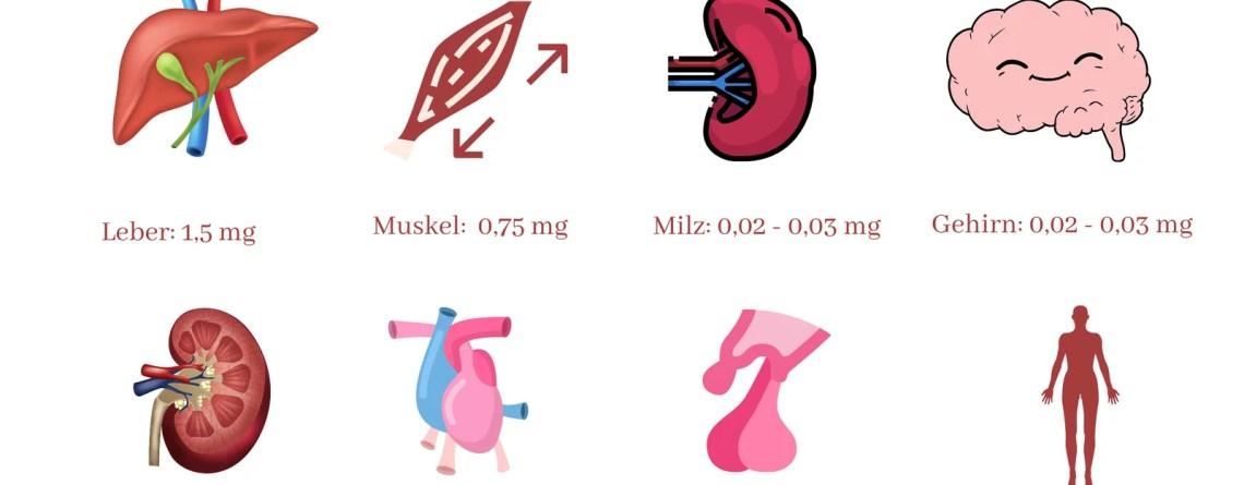 Gewebsspeicher Vitamin B12 Wissen