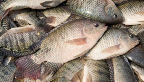 tilapia-feed-plant-costa-rica