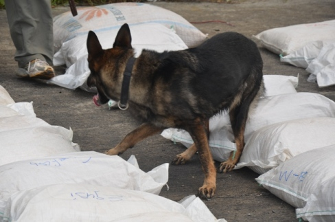 Sniffer dog searches for hard drugs