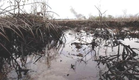 Reps Call For Immediate  Cleanup Of Oil Spillage In Urhobo community
