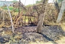 Photo of SINGRAULI NEWS  के इस गांव में ट्रांसफॉर्मर की चिंगारी से बाउंड्री में लगी आग।
