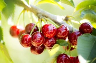 Sağlıklı Gıda İçin 9 Tarım İlacına Yasak, 7Sine Kısıtlama