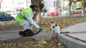 Bayraklı Belediyesi Sokağa Çıkma Kısıtlamasında Sokak Hayvanlarını Unutmadı