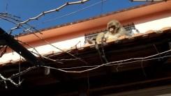 İzmirde Başı Boş Gezen Maymun Görenleri Şaşırttı