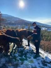 Karla Kaplı Spil Dağındaki Yılkı Atlarını Elleriyle Beslediler