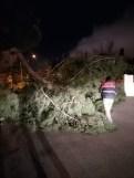 İzmirde Fırtına Sebebiyle Ağaçlar Devrildi