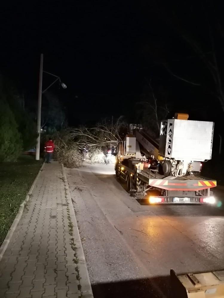 İzmir'de Fırtına Sebebiyle Ağaçlar Devrildi