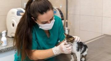 Kısırlaştırılan Kedi-Köpek Sayısı İki Katına Çıktı
