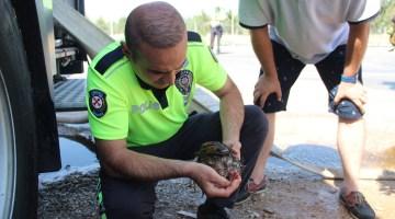 Dumandan etkilenen hayvanlara polis ve vatandaştan ilkyardım