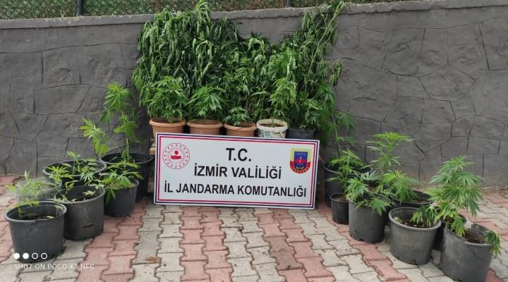 Jandarma'dan 9 ilçede uyuşturucu operasyonu: 11 gözaltı