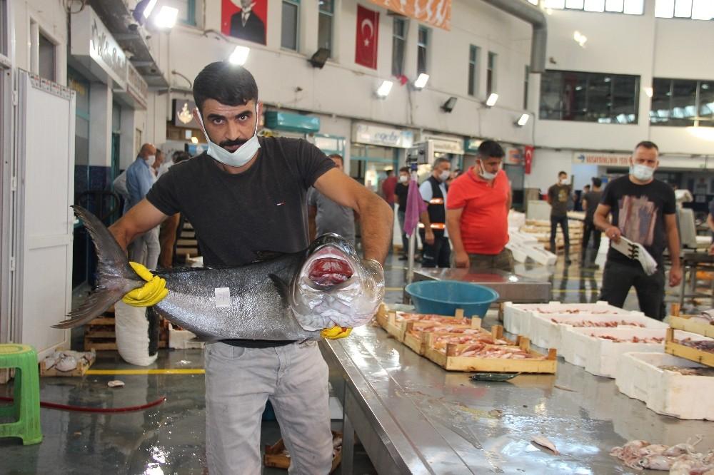 İzmirin Balık Halinde Hem Hareket Hem Bereket Var