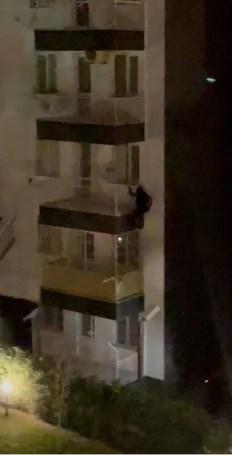 5. Kattan Örümcek Gibi Aşağı İnen Zanlı Yakalanmaktan Kurtulamadı