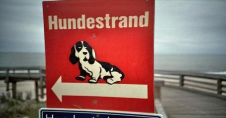 Mit deinem Hund zum Strand