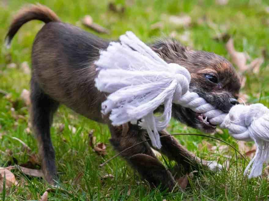 Montags Frage: Hundespielzeug