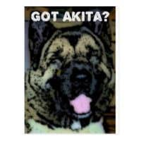 Akita Love Postcard
