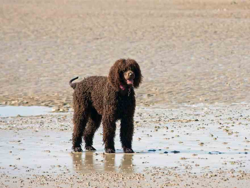 Beach Coast Sand Wet Puppy Dog 1122509 Pxhere Com