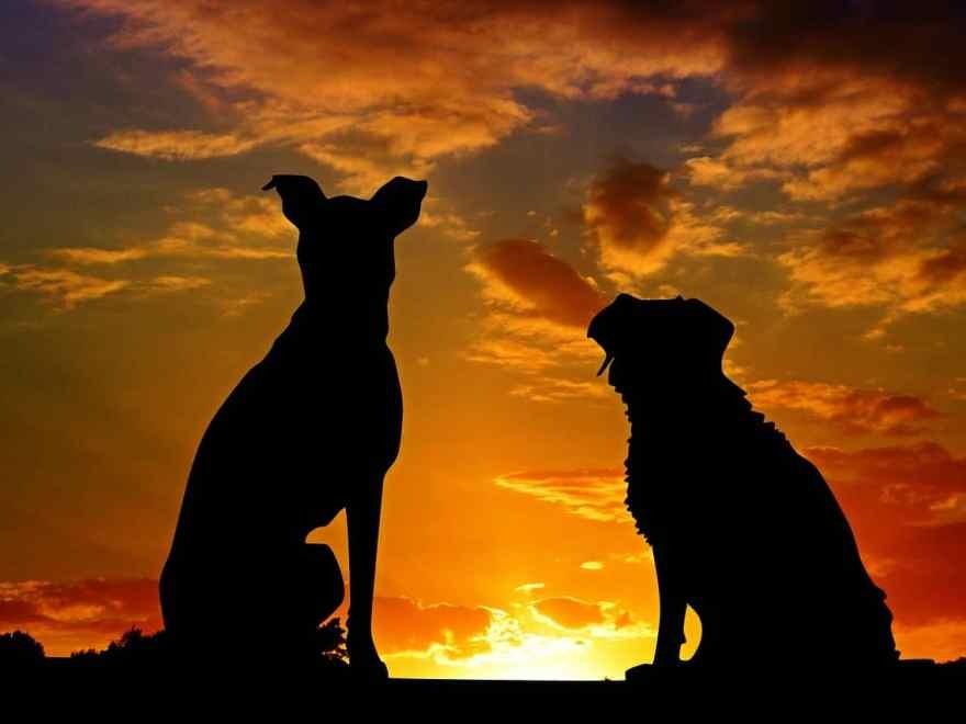 Lizenz freie Hundebilder