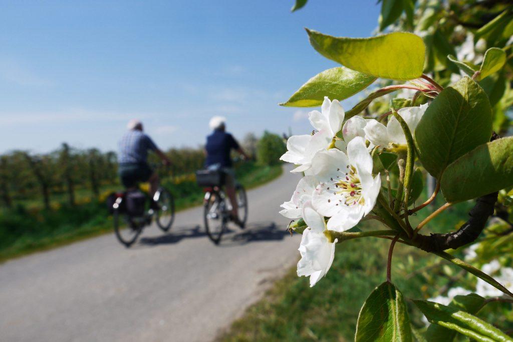 """Die """"Obstroute"""" führt in zwei Schleifen von 37 und 41 Kilometern Länge mitten durch die blühenden Obstplantagen."""