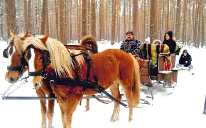 Mit dem Pferdeschlitten geht es beispielsweise an Silvester durch den verschneiten Winterwald.