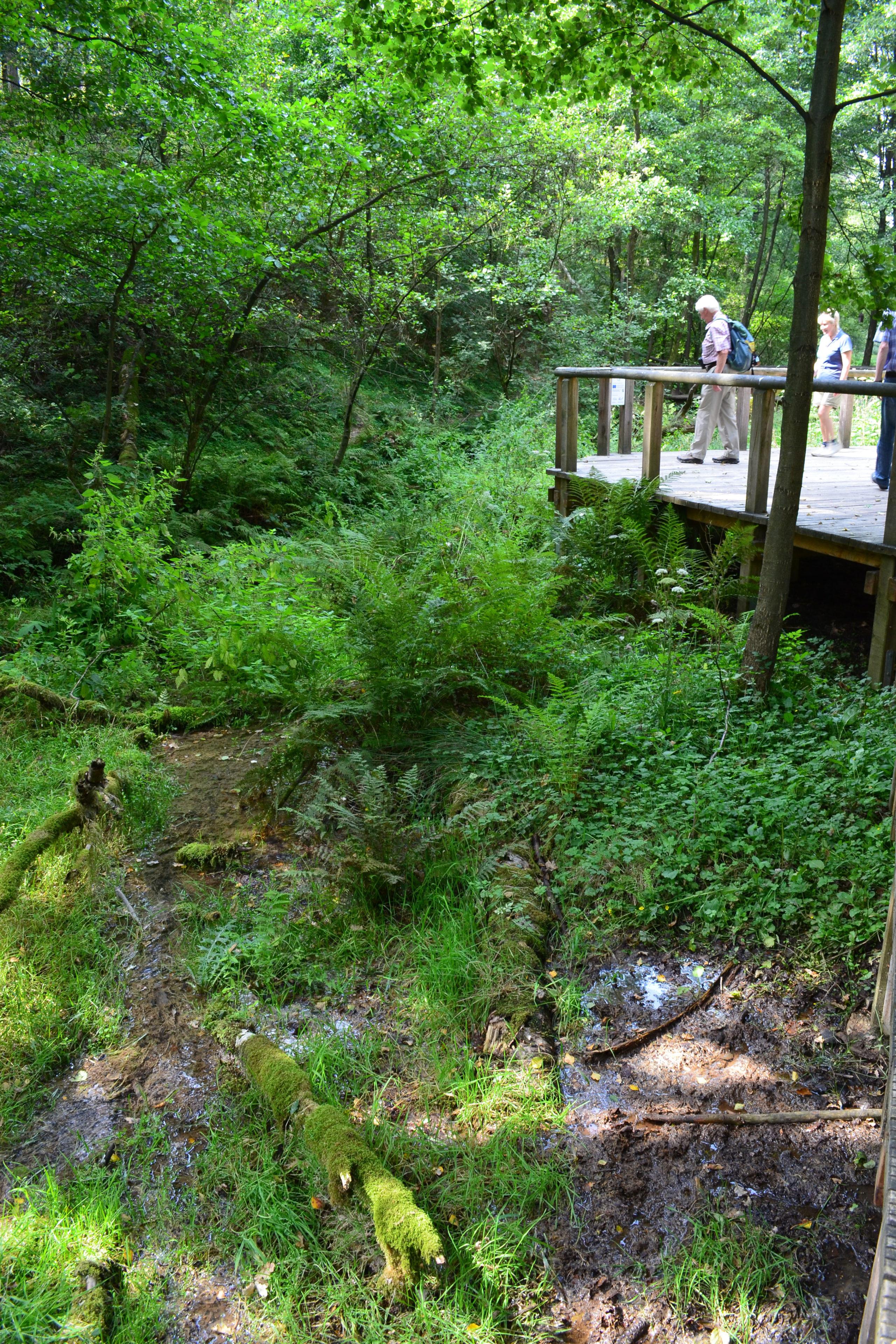 Auf dem Urlaubsprogramm sollte unbedingt ein Ausflug zur Emsquelle im Naturschutzgebiet Moosheide stehen.