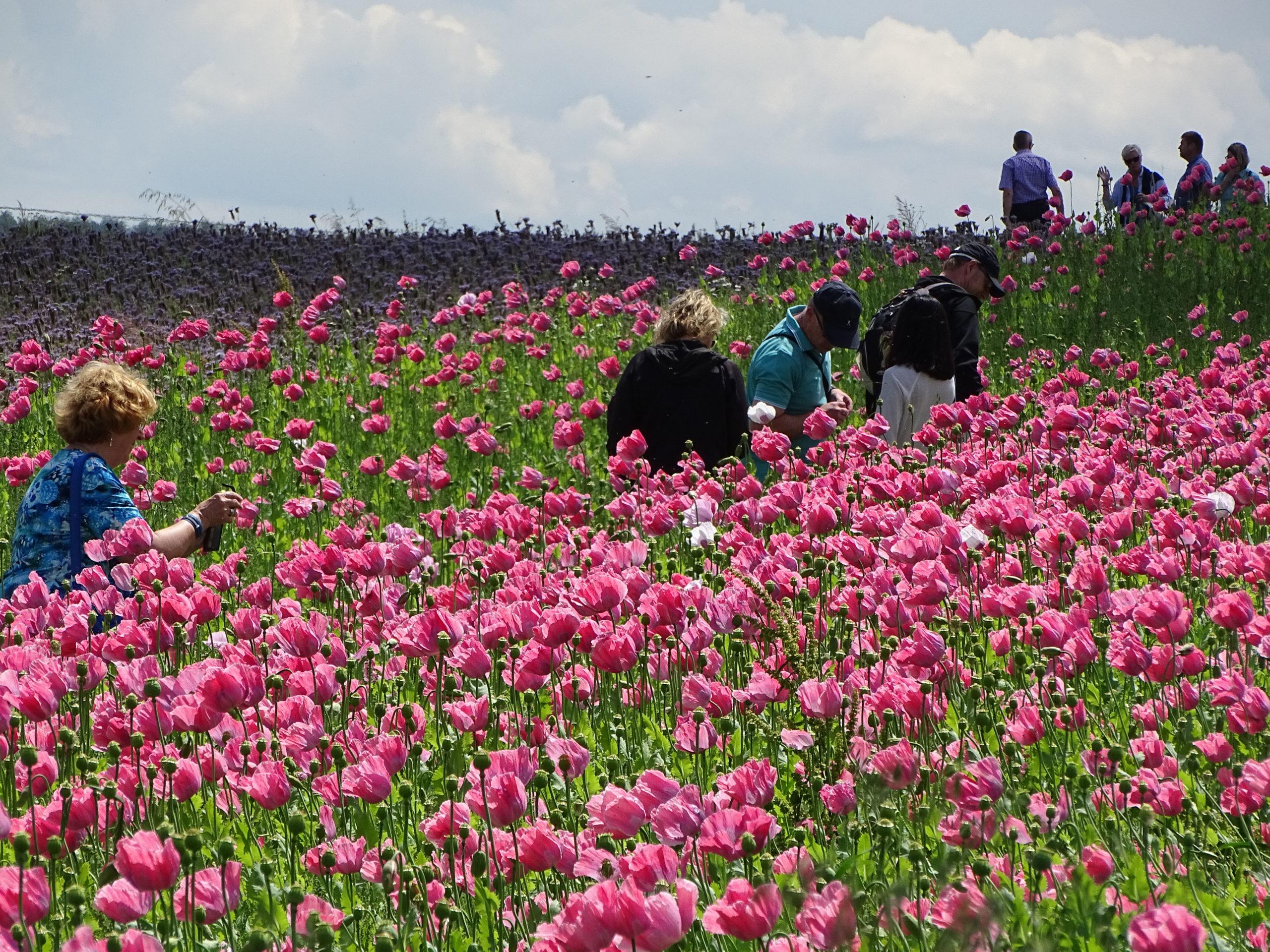 Wandern zwischen Blütenpracht und sagenumwobenen Orten