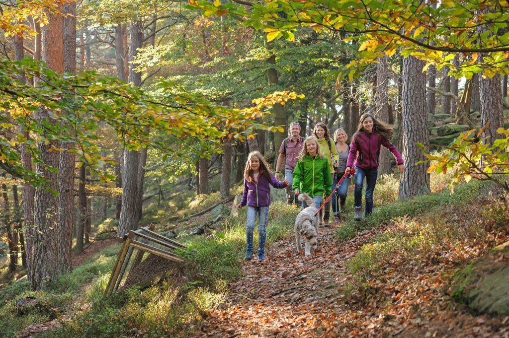 Ein anspruchsvoller und schöner Rundweg durch die Weinberge und den Pfälzerwald führt in etwa 4,5 Stunden von Neustadt an der Weinstraße zum Hambacher Schloss und zurück - Wandertouren
