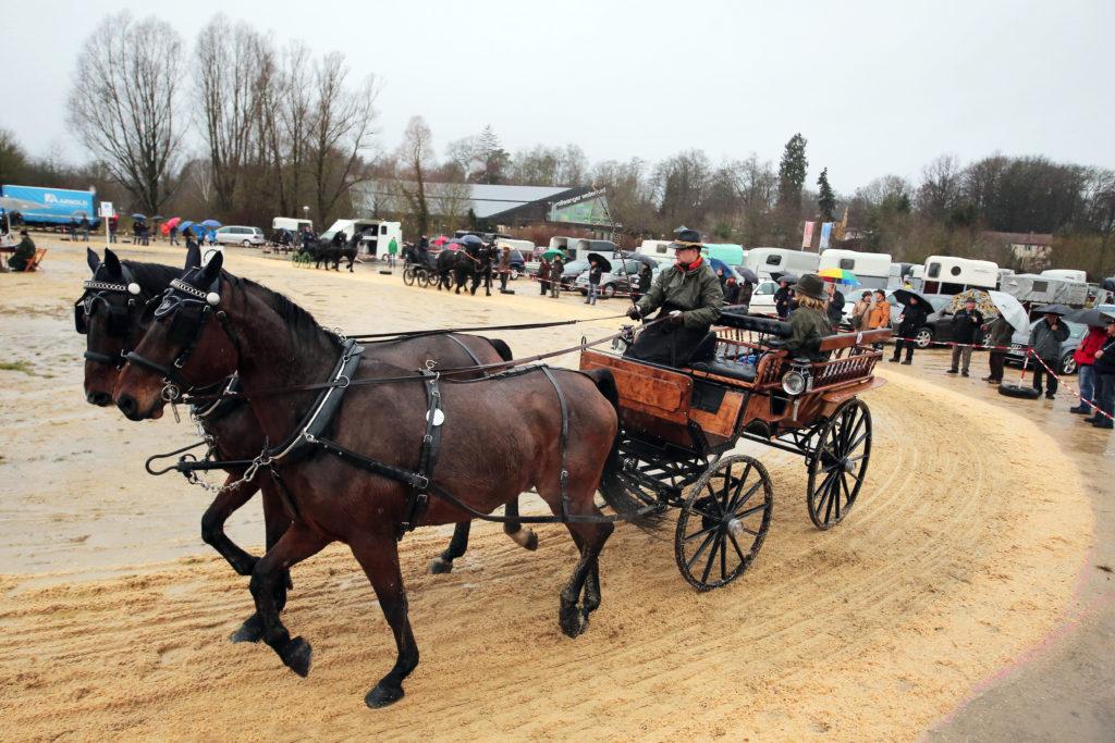 """Ein großes Erlebnis auch für Nicht-Pferdekenner ist das Pferdeschaulaufen auf dem """"Schießwasen"""" am Montagmorgen - Der Kalte Markt in Ellwangen"""
